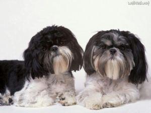 perros mas viejos